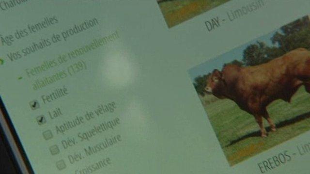 Site de rencontre pour vache...