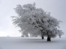 Rencontres en hiver